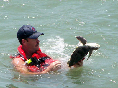 Sea Turtle Rescue at Sunset Beach Pier