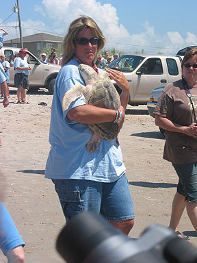 Topsail Turtle Release
